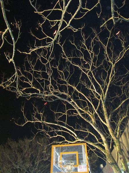 20110206-07平溪2日遊100.jpg