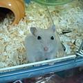 鼠鼠 008.jpg