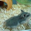鼠鼠 026.jpg