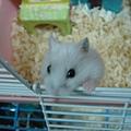 鼠鼠 029.jpg