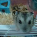 鼠鼠 034.jpg