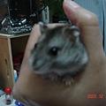 傑克 2005-12-14 下午 06-36-27-1.jpg