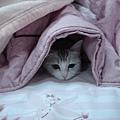 最愛躲在棉被裡
