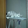 古怪的睡姿