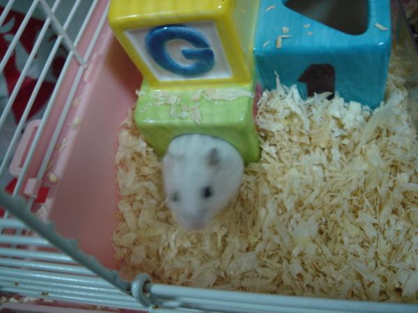 鼠鼠 027.jpg