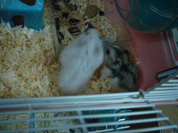 鼠鼠 038.jpg