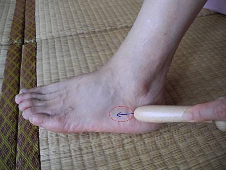 膝關節反射區