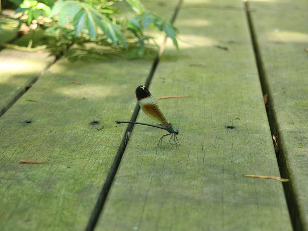 蜻蜓.JPG