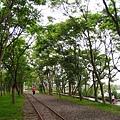 今日的鐵道有著濃密樹蔭