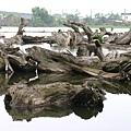 林業文化園區內枯木處處的湖景