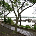 樹林間環著湖的木柵道