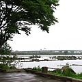 環湖的木柵道偶見休憩的平台