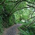 林美石磐步道綠意環繞