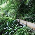 石磐步道在林間向前延伸
