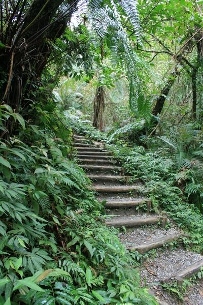 圓木隔出的泥階梯帶著遊客開始上坡囉