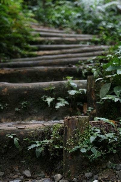 固定圓木旁的木樁
