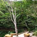 得子溪上的休息平台