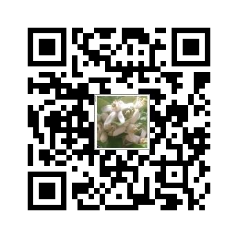 麻豆文旦預訂單網址