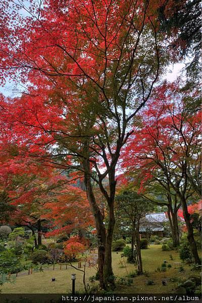 庭園(秋2).jpg
