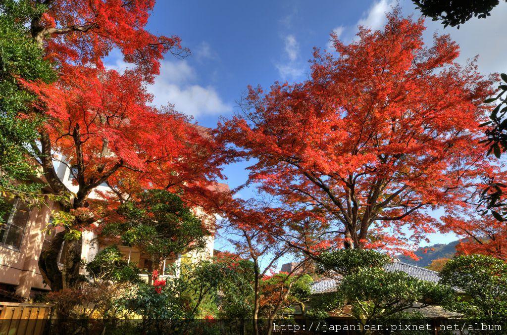 庭園(秋3).jpg