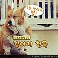 2012. 7 Nasu Animal Kingdom. rental dog.jpg