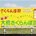 05大橋さくらんぼ_pixnet.jpg