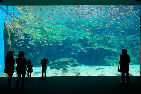 海洋KIRARA.jpg