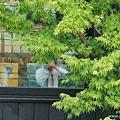 湯布院溫泉 金麟湖畔 咖啡廳