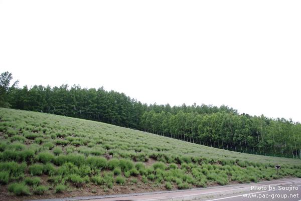 富田農場 (16).jpg