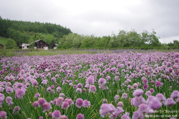 富田農場 (25).jpg