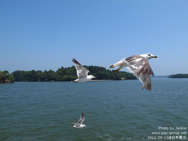 松島遊船 (18).jpg