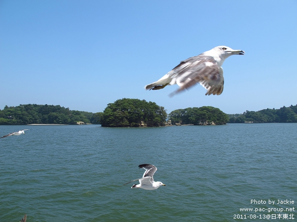 松島遊船 (19).jpg