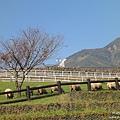 八個岳牧場 (19).jpg