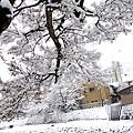 宮川朝市 (6).jpg