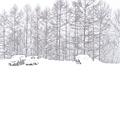 滑雪場 (11).jpg