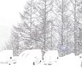 滑雪場 (12).jpg