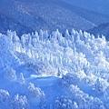 藏王樹冰 (9).jpg
