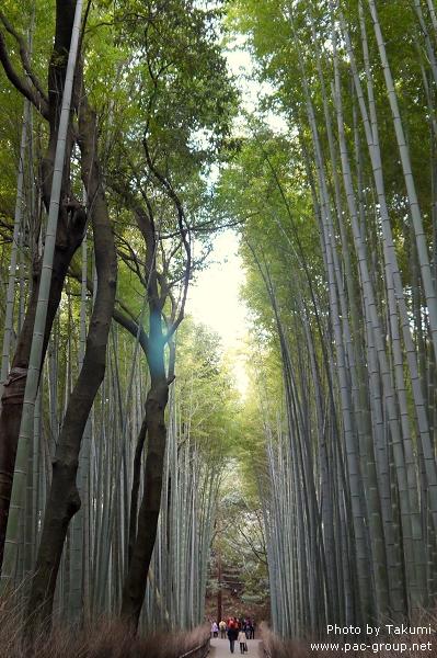 D3-3 嵐山 (1).jpg
