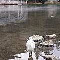 D2-3 湯布院+金鱗湖 (5).jpg