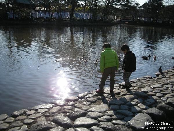 D2-2 鶴岡八幡宮 (3).jpg