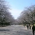 D4-1 上野公園.jpg