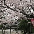 09 松江城 (2).jpg