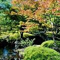 由志園牡丹花園 (8).jpg
