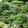 由志園牡丹花園 (38).jpg