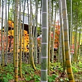 箱根神社 (7).jpg