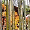 箱根神社 (8).jpg