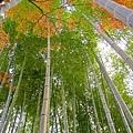 箱根神社 (9).jpg