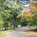 天橋立沙洲 (2).jpg