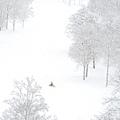 NISEKO希爾頓飯店+滑雪場 (14).jpg