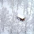 NISEKO希爾頓飯店+滑雪場 (15).jpg